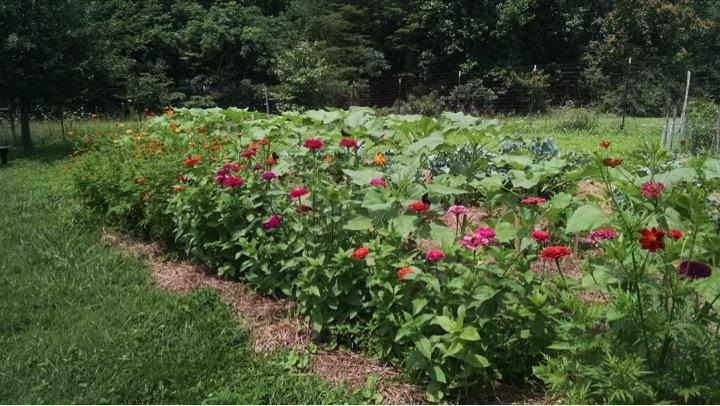 gardenIN